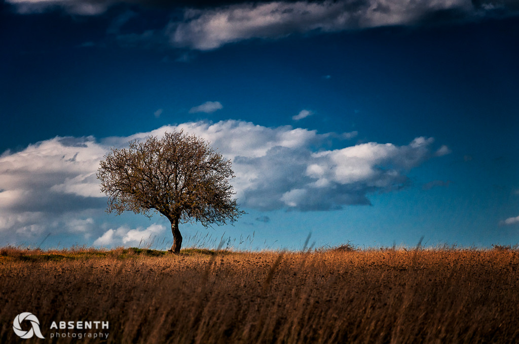 Lonely Tree In Spring Field